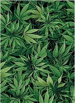 Cannabis Leaf Fabric, Timeless Treasures