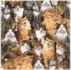 Cat Crazy Scattered, Robert Kaufman