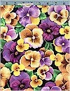 Perfect Pansies Multi Marcus Brothers