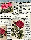 Roses In The News Timeless Treasures