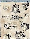Sleepy Hollow Skeletons Robert Kaufman