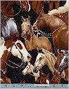 Horses, Way Out West, Robert Kaufman